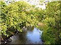 NZ1961 : River Derwent by David Dixon