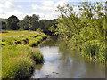 NZ1861 : River Derwent, Derwenthaugh Park by David Dixon