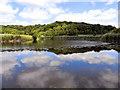 NZ1860 : Derwenthaugh Park, Clockburn Lake by David Dixon