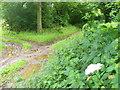 SU6035 : Oxdrove Way Near Nettlebed Farm by Colin Smith