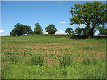 ST8180 : Field near Acton Turville by David Purchase