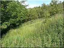 SE0125 : Line of Hebden Royd Path 61 east of Brink Top, Mytholmroyd by Humphrey Bolton