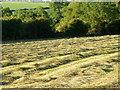 SU1326 : Mown grass, Homington by Maigheach-gheal