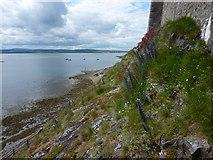 NU1341 : Wild flowers on castle rocks by Peter Barr