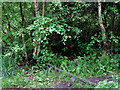 SJ9048 : Overgrown railway line north of Bucknall, Stoke-on-Trent by Roger  Kidd