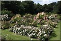 SJ4182 : The Rose Garden at Speke Hall by Jeff Buck