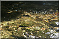 SX4870 : Whitchurch: river Walkham close up by Martin Bodman