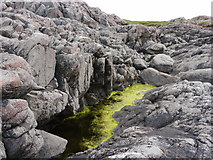 NM1053 : Weedy tide-pool near Calgary Point by Gordon Brown