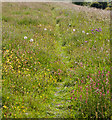 SU5029 : Wild flowers upon Magdalen Hill Down by Peter Facey