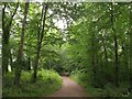 SX5154 : Path beside Chelson Meadow by Derek Harper