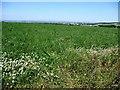 SE2112 : Clover-edged field by Christine Johnstone