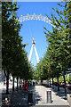TQ3079 : London Eye, London SE1 by Christine Matthews