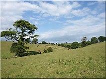 SX5350 : Valley near Spriddlestone by Derek Harper