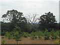 TQ3997 : Dead tree on field boundary by Roger Jones