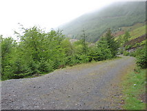 NY2427 : Track in Thornthwaite Forest by David Purchase