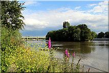 TQ1977 : River Thames, Kew by Christine Matthews