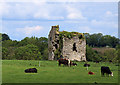 N7856 : Castles of Leinster: Newhaggard, Meath by Mike Searle