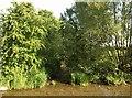 SP2853 : River Dene at Walton Ford by Derek Harper