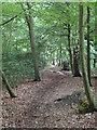 TQ4398 : Footpath in Birch Wood by Roger Jones