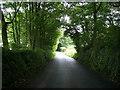 SM9724 : Tree-lined road, near Triffleton by Martyn Harries