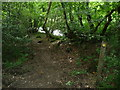 SN0818 : Riverside path above the Eastern Cleddau by Jeremy Bolwell