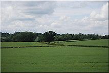 SP2180 : Farmland south of Hampton in Arden by N Chadwick