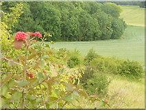 TQ2352 : Below Conybury Hill by Colin Smith