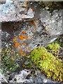NN3341 : Mosses, Coire Daingean by Michael Graham