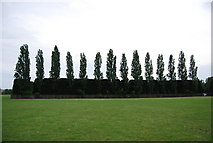 TQ2472 : Trees hiding the Athletics Track, Wimbledon Park by N Chadwick