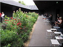 TQ2679 : Serpentine Gallery Pavilion 2011 - inside view with garden by David Hawgood