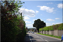 TQ8115 : A28 entering Westfield by N Chadwick