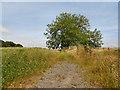 SD7413 : Path to Affetside by David Dixon
