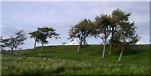 NS3262 : Larches above Heathfield by Mark Nightingale