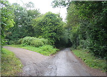 SP3177 : Lane to Canley Ford by E Gammie