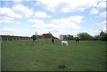 TQ8115 : Horses grazing, Downoak Farm by N Chadwick