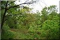 TQ2372 : Wimbledon Common by N Chadwick