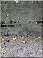 TQ8124 : Bench Mark, Ewhurst Lane by Maigheach-gheal