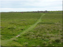 NU1341 : Footpath from Lindisfarne Castle to Gertrude Jykell's Garden, Holy Island by Alexander P Kapp