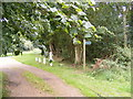 TM4365 : The entrance to Theberton Hall & footpath to Hawthorn Road by Adrian Cable