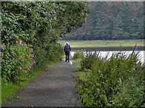 SD7217 : Walking the Dog by David Dixon