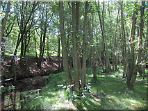 TQ4532 : Stream through Birch Wood by Oast House Archive