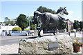 SN4662 : Welsh Cob Horse Aberaeron by Jo Turner