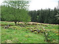 NX4167 : The remains of old agricultural buildings by Ann Cook