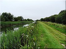 N5832 : Grand Canal in Rogerstown, Co. Offaly by JP