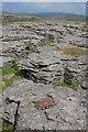 SD7678 : Limestone Outcrops, Fell Close Rocks by Mick Garratt