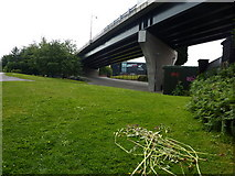 SK3635 : Pride Parkway, Derby College and a few shoots of Himalayan Balsam by Peter Barr