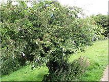 N5877 : Wishing Tree on the path to Loughcrew by Eric Jones