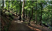 J4681 : Path, Crawfordsburn Country Park by Albert Bridge
