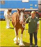NX0660 : Clydesdales Competition by Andy Farrington