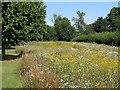 SK4032 : Wildflower meadow in Elvaston Castle grounds by Richard Green